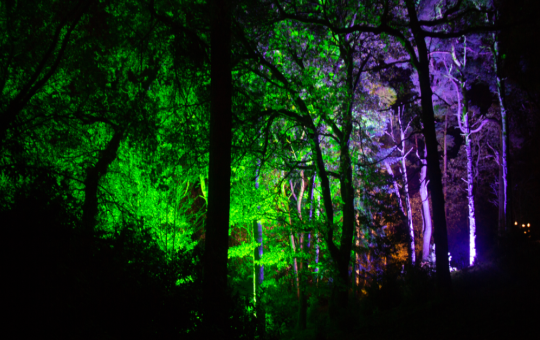 Core Lighting Uplighters being used in the trees of Sheringham park to create effects